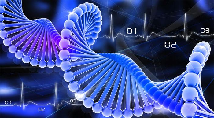 ДНК 7