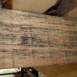 Примеры биопоражения древесины первый снимок