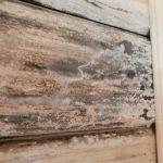 Примеры биопоражения древесины третий снимок
