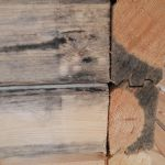 Примеры биопоражения древесины четвёртый снимок
