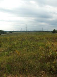 Фото 1. Общий вид растительность после прокладки трубопровода, спустя 4 года.